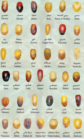 An image showing different kinds of dates