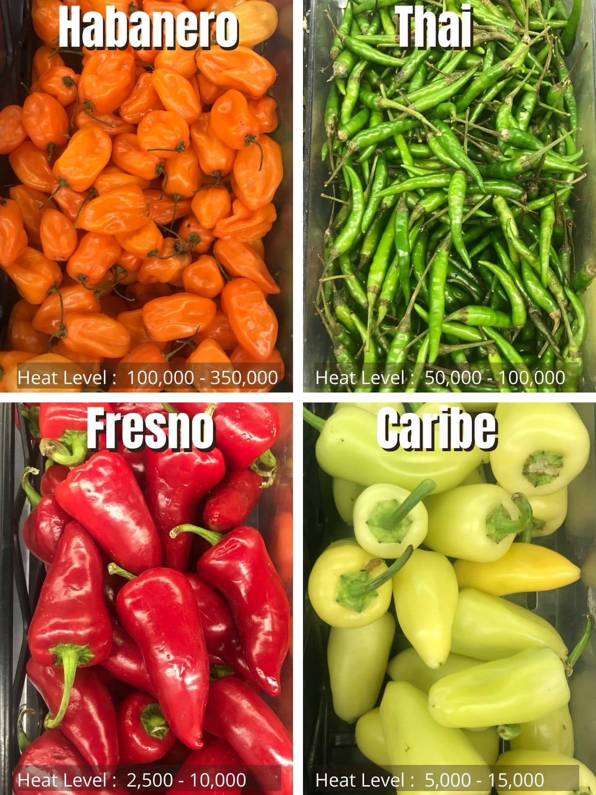 chili peppers guide with their heat level